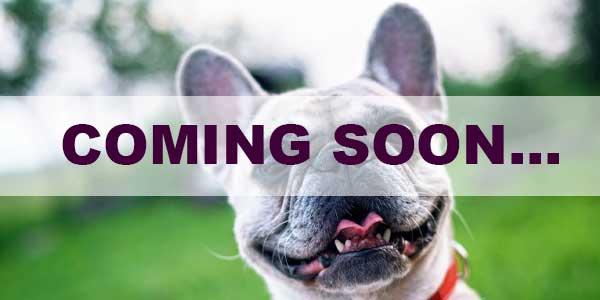 coming soon CBD DOG TREATS!